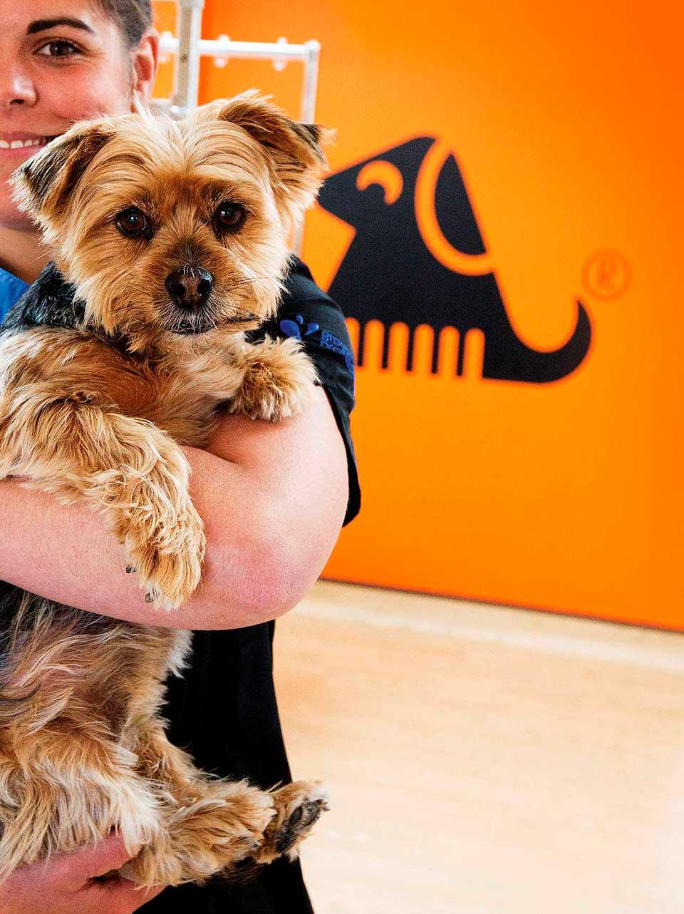 Loving Pets at The Dog Groomer