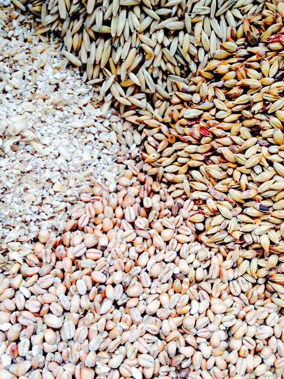 Grains within Loomshed