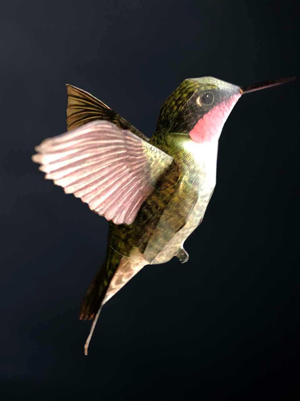 Hummingbird Woodstar Drink